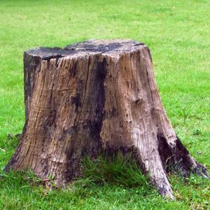 tree stump grinding & removal service