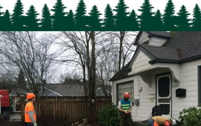 Cutting Down Trees Sans The Power-lines | Interview with Roadside Multimedia Inc.