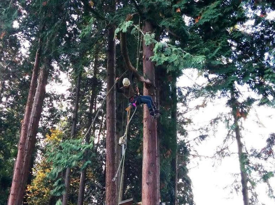 Tree Services in Woodinville, WA