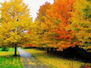 Landscaping Kirkland fall color planting