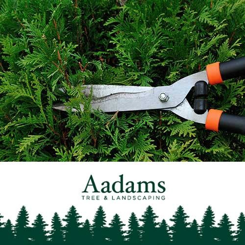 AAdams Tree Shares the Top 4 Reasons to Trim and Prune Your Trees