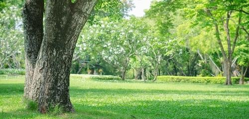 What Are the Benefits Of Deep Root Fertilization?