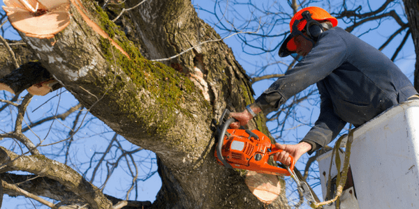 Sometimes a sick tree can be saved and you won't need to remove your tree.