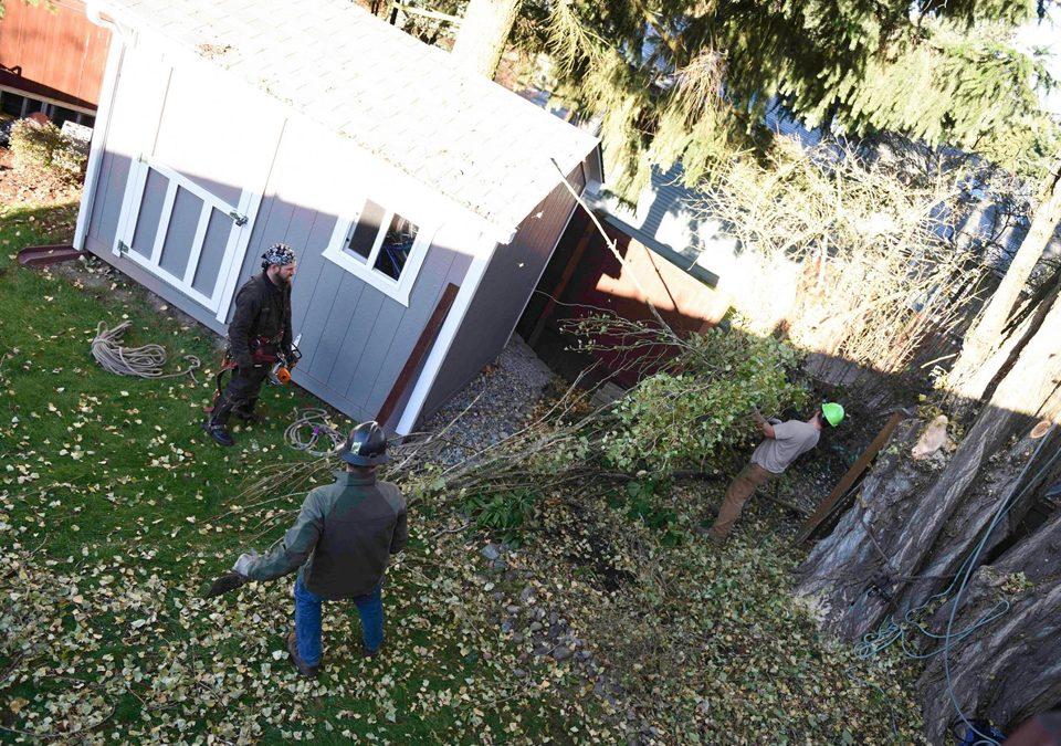 Emergency Tree Service, Be Prepared